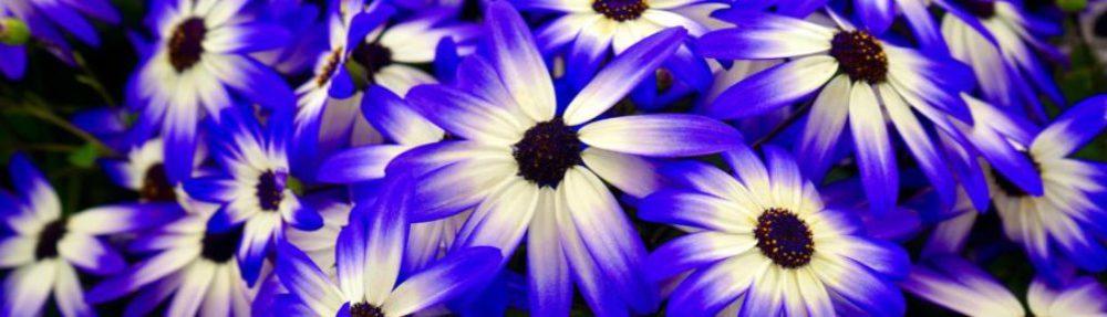 Praktijk The Flower, Counseling.