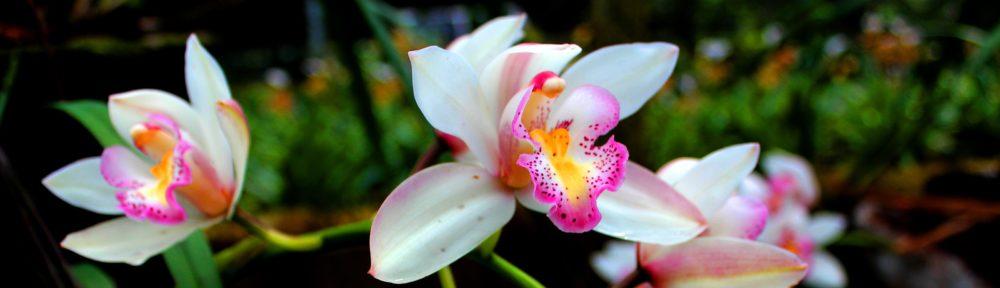 Praktijk The Flower